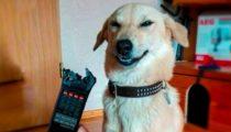 lustige katzen und hunde XewbmK0kmpI Sinnlos Internet - Die sinnlose Portion Spaß