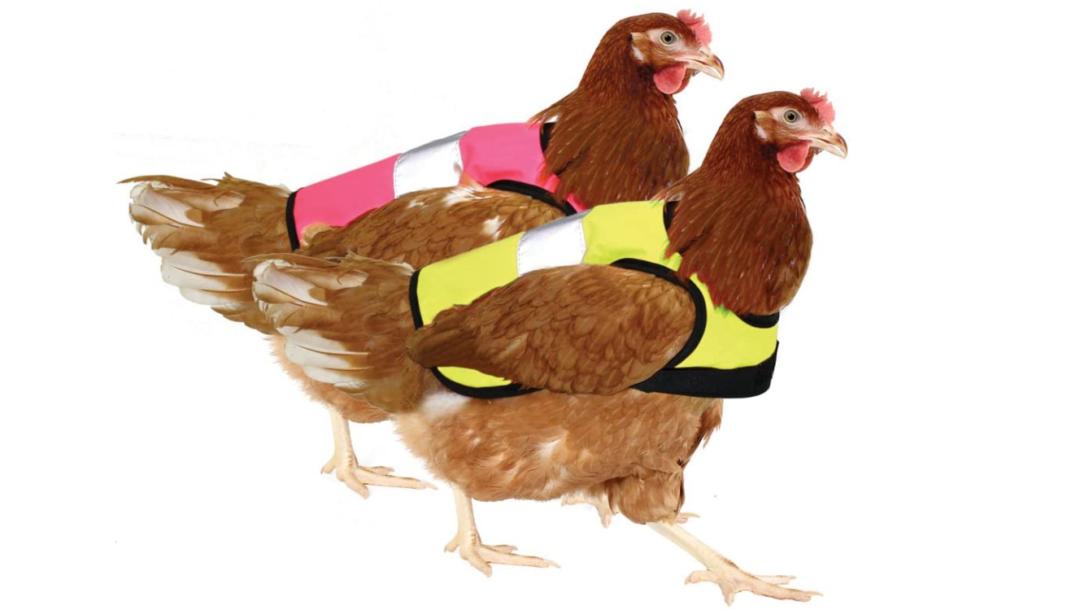 Warnweste für Hühner*