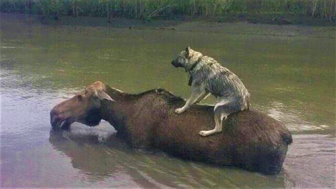 Tiere retten sich gegenseitig
