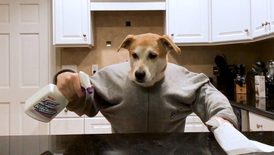 Ein Hund unter Quarantäne