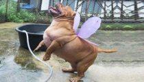 lustige tiere EFDZgr189uA Sinnlos Internet - Die sinnlose Portion Spaß
