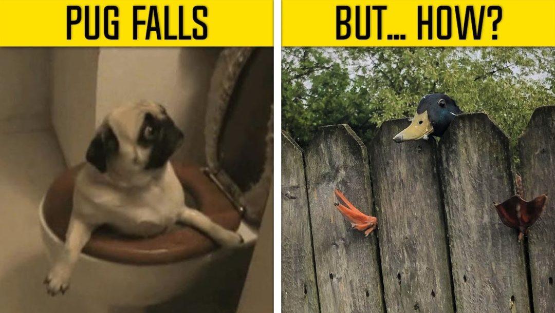 Tier Fails – Wie haben die das nur gemacht?