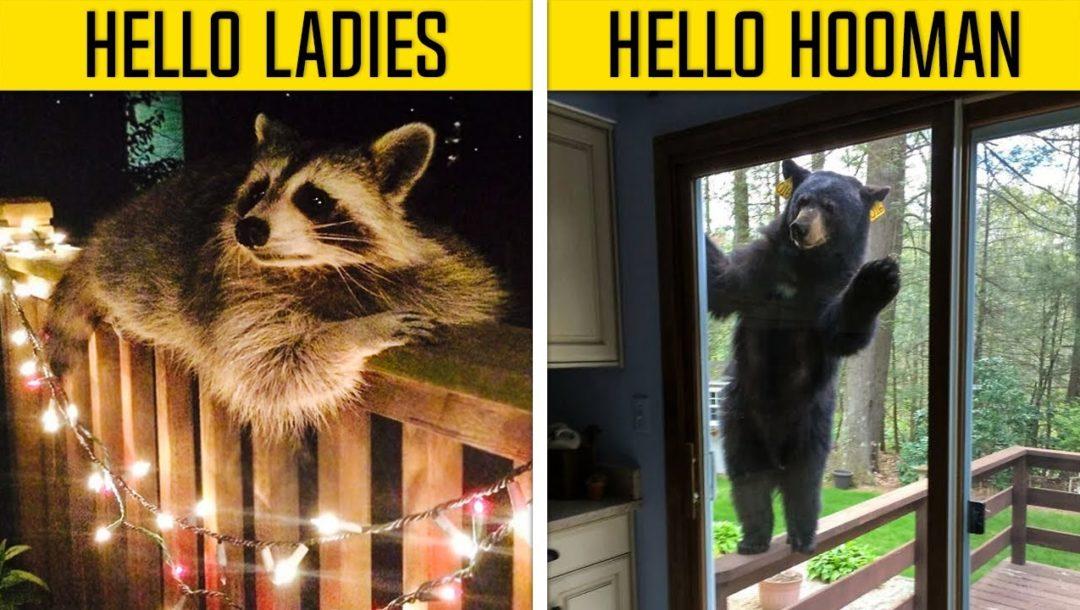 Tiere die nur mal eben Hallo sagen wollten