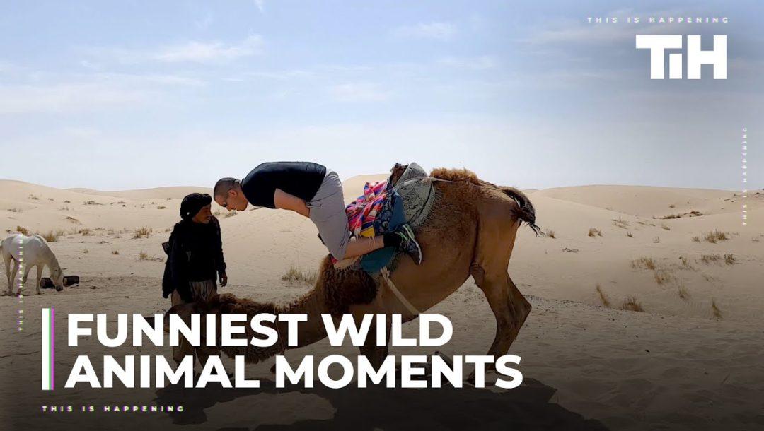 Lustige Wildtiere