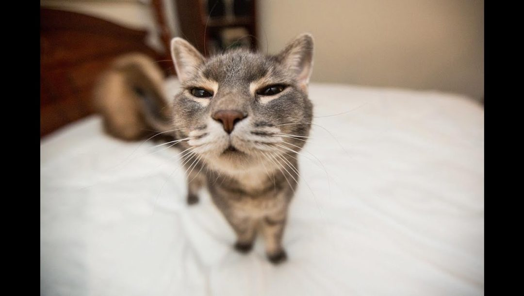 Cat Compilation