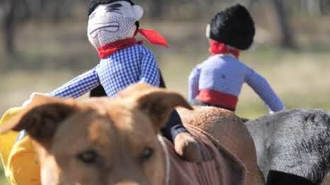 Hunde Cowboys