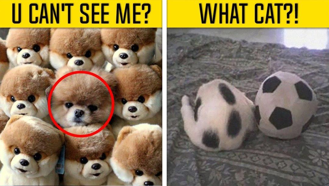 Tiere die sich verstecken
